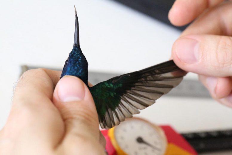 Measuring Wing
